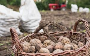 Кражи в садоводствах статья и наказание за кражи в СНТ